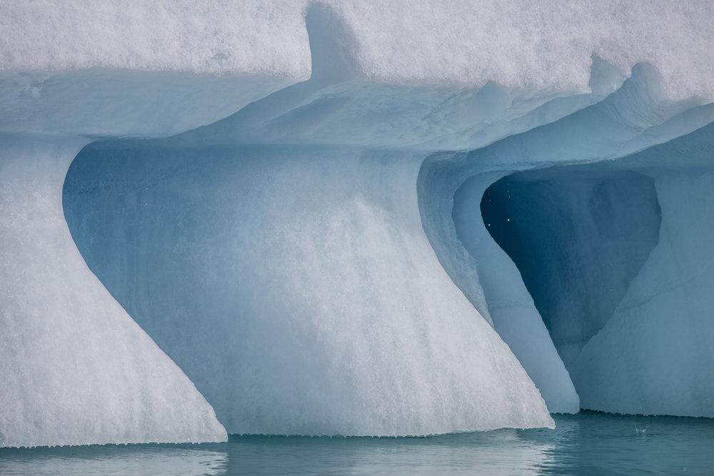 1 hour Arctic  038.jpg