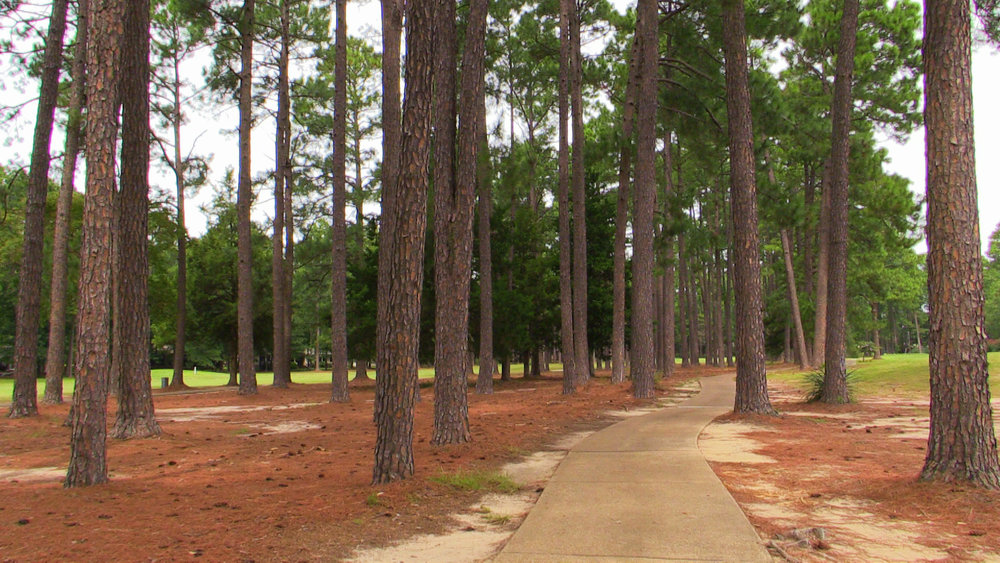 1ST HL - PINE TREE CART PATH EDITED.jpg