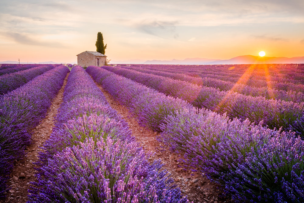 How Smell Effects Mood and Memory - Discover how aromatherapy uses the power of smell to influence how we feel.