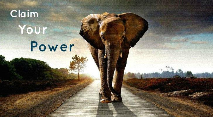 elephant-power1.jpg