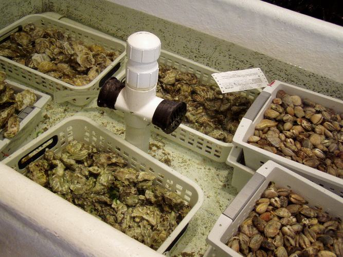 There's always a great selection of locally farmed oysters, clams and mussels