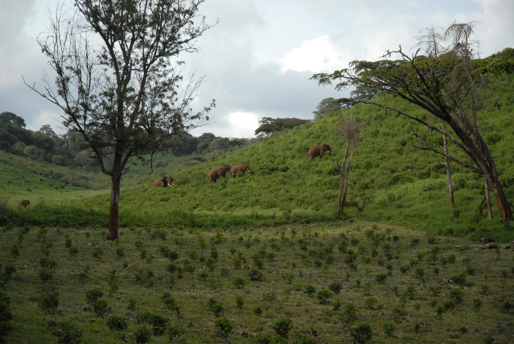 Mark Stell visits the Tanzanian coffee farm three times a year. The elephants are not on payroll.