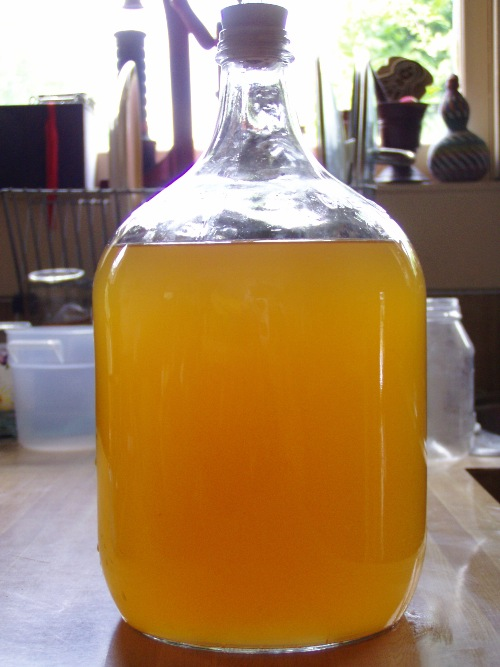 Turn your weeds into wine -- dandelion wine! I'll be talking all things fermented at this years Yard, Garden & Patio Show on Saturday, February 18th at the Oregon Convention Center.