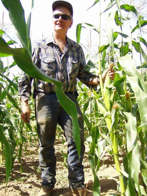 Chris Winters of Winters Farm between Troutdale and Corbett sells pirate corn in the early summer -- it's a buck an ear.