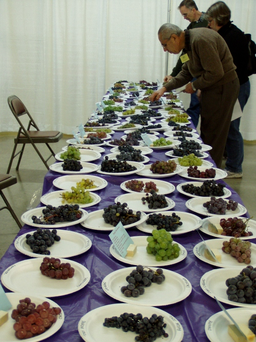 All sorts of grapes.