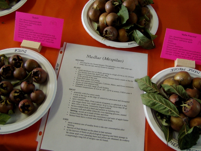 Medlar which some people describe as a tart cinnamony apple.
