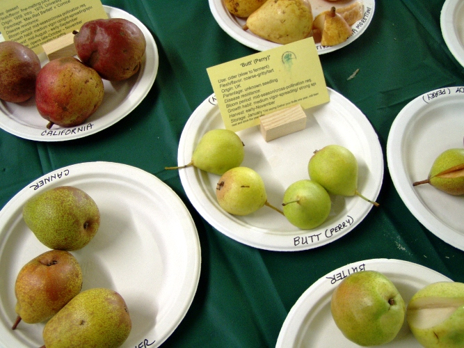 Lots of different pears. I like the name of the one in the middle.