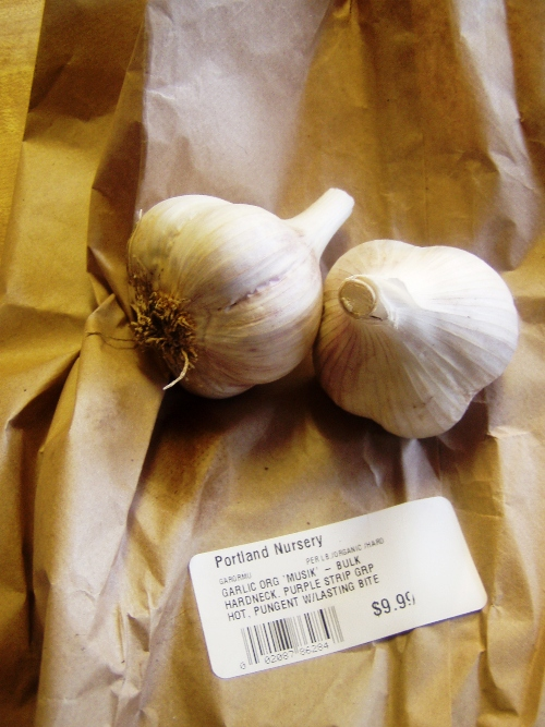 I grew this type of garlic last year and again this year. It's really good.