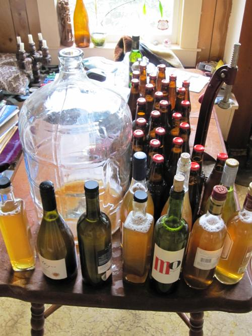 Five gallons of homemade hard cider bottled with the final jump of sugar.
