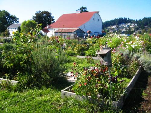 I spent some time at Luscher Farm in fall 2008 for Portland's first Organic Gardening Certification Program. I took this photo during one of our classes. Beautiful.