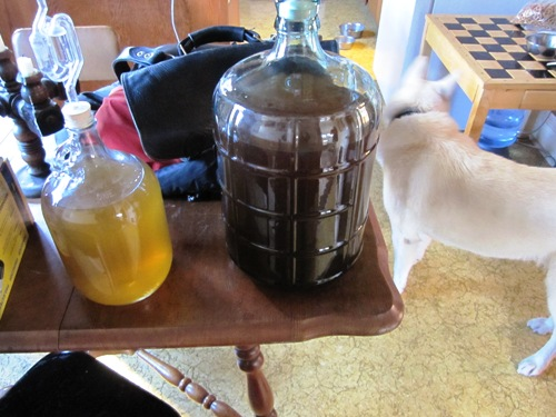 Racked homemade dandelion and plum wines.