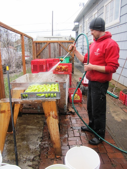 Nat rinsing the apples before I put them through the apple mill aka retrofitted garbage disposal in the garage.