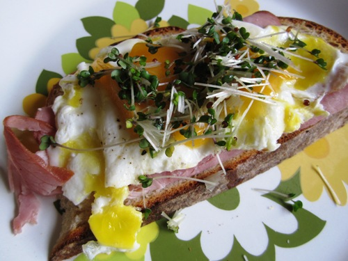 Open-faced egg and ham with cheddar and broccoli sprouts.