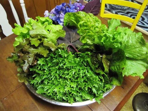 Our next-door neighbors Michael and Mulysa gave us this enormous bowl filled with all different lettuces from their backyard. So good.
