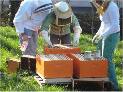 Check out this year's 2nd annual Tour de Hives put on by the Zenger Farm Bee Group.