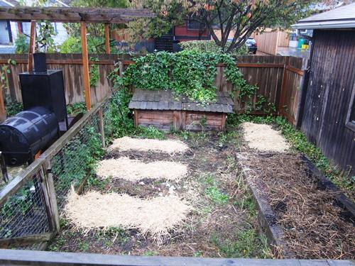 I put all the beds under thick blankets to sleep until the spring. My neighbor Alison and I have an agreement -- if I clean her chicken coop then I get the skat straw for my yard. Perfect.