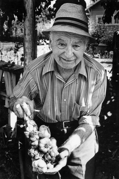 Get tomatoes next Friday grown from seeds that this man, the late Ulisse Edera, grew for years -- 100 year old, tomato seeds that he brought to Portland from Italy. Photo courtesy of Keith Skelton.