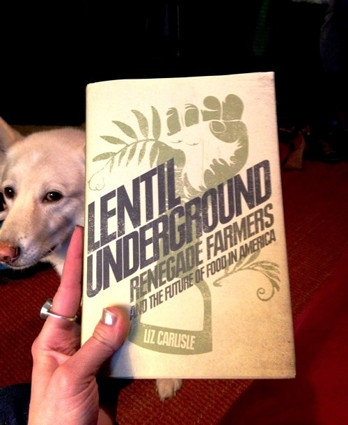 Look at that fuzzy gentle lentil behind the book! Rubin is my favorite photo bomber.