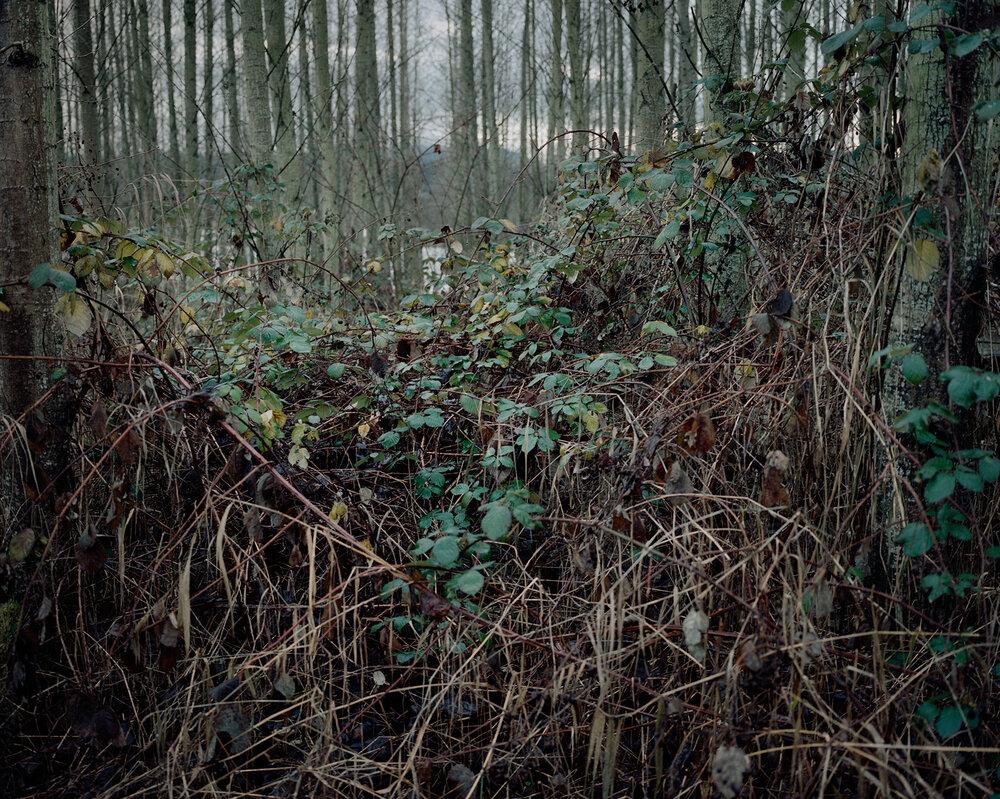 Skagit woods 2.JPG
