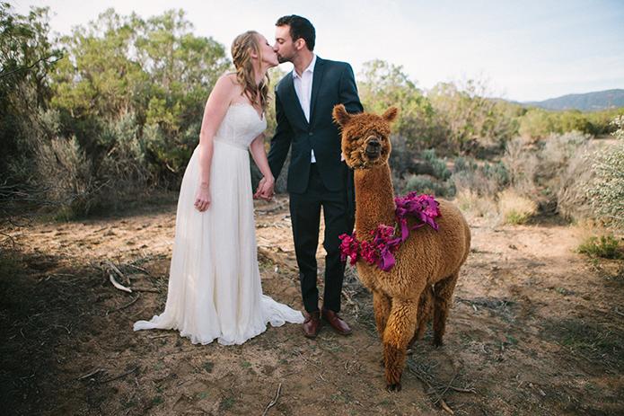 Anza-valley-wedding-at-the-alpaca-farm-bride-and-groom-kissing-by-alpaca.jpg