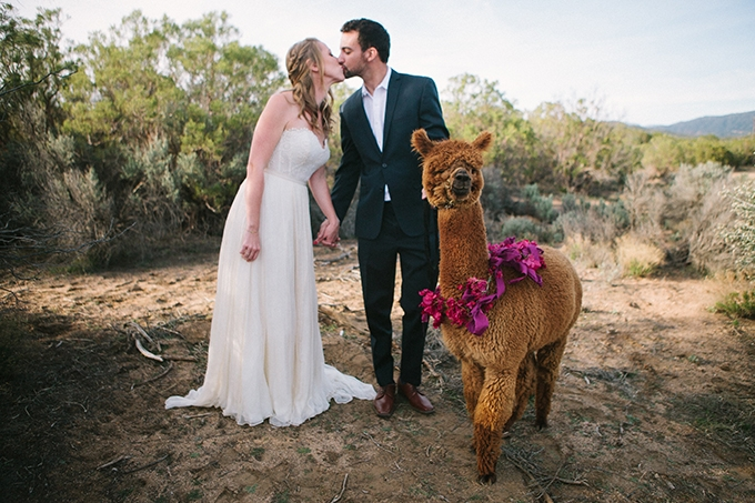 SAMANTHA + JOHN - ALPACA FARM SHOOTANZA VALLEY, CA