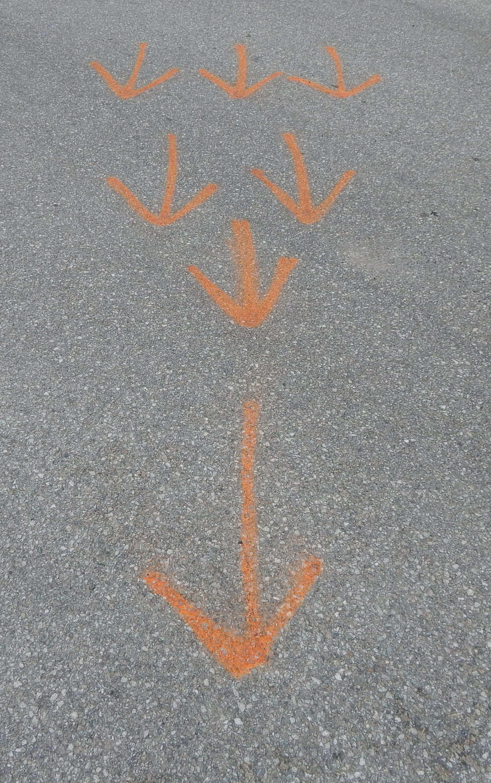 Seven Orange Arrows.JPG