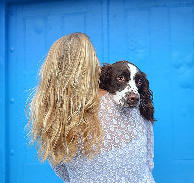 Gift a phodography photoshoot to someone you love and their dog 💙 see website for details  #mansbestfriend #dogsofinstagram #londondogs #instagdog #petphotography #dogsoflondon #spaniel #springerspaniel