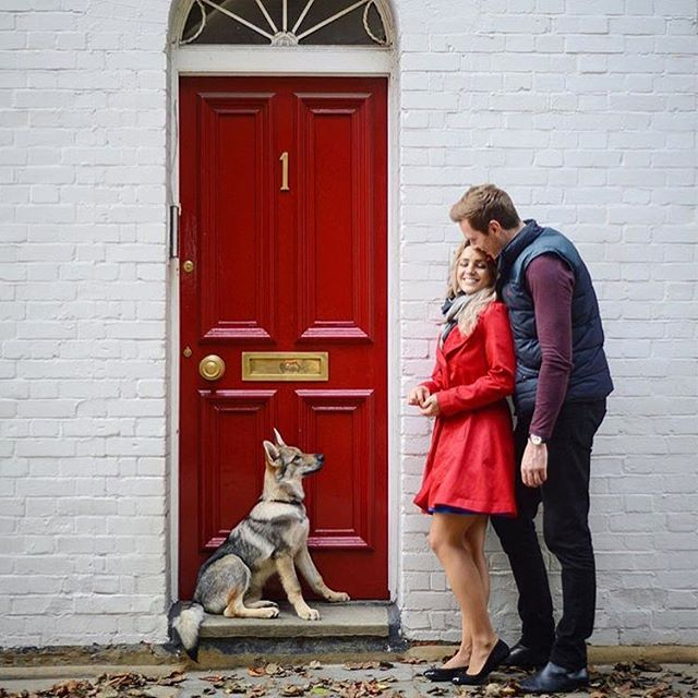Visit the website to buy a Phodography Voucher for the ultimate dog lovers Christmas gift 💙 capturing the moments you never want to forget #londondogs #mansbestfriend #dogsofinstagram #wolfdog #london #gift #love #puppy #petphotography
