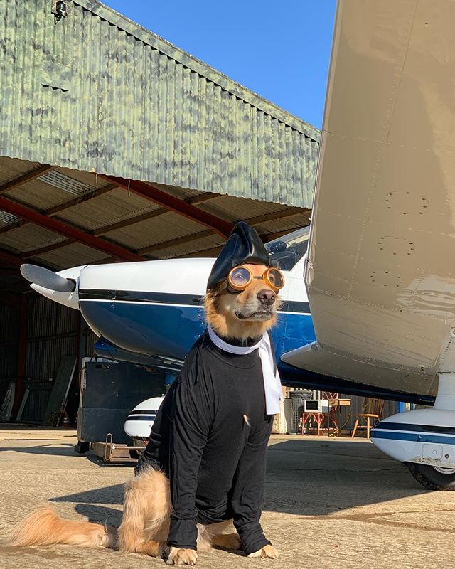 My favourite thing about this photo isn't the doggles, the zoomy sky car or even the little white flying scarf - it's the golden tuft popping out of Hugo's furtleneck. #fashion