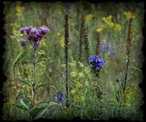 Wild Prairie Brass