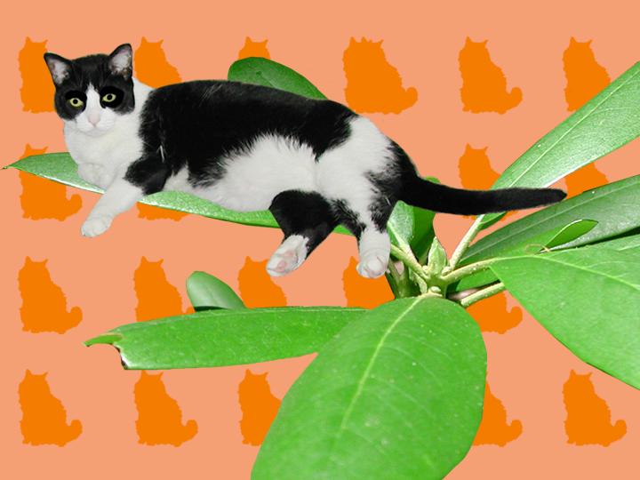 cat_caterpillar.png