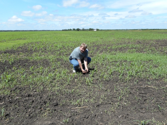 Author in a wheat field in Odessa, Ukraine. This field was owned by his family until the Russian Revolution