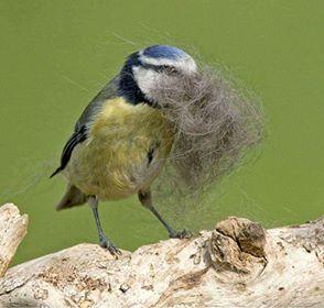 nestbird.jpg