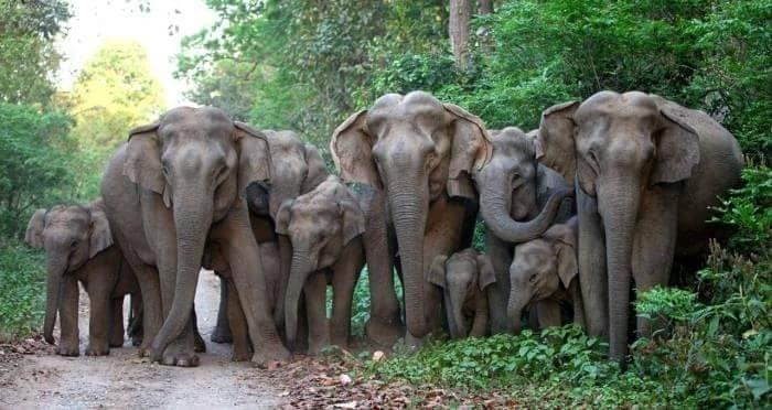 A gorgeous Asian Elephant family in India.