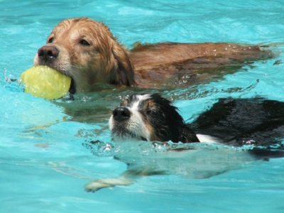 Doggie Dip at the Assiniboia Aquatic Centre on Friday August 31