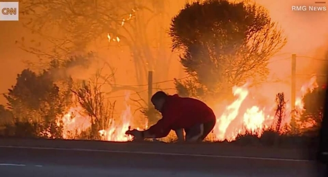 A man rescues a cottontail rabbit from the roadway, while fleeing the fires of Ventura, California in 2017.