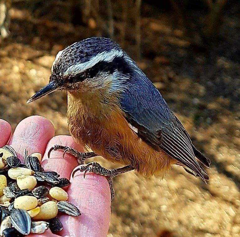 Nuthatch has a lot to chose from (Photo by Kim Epp)