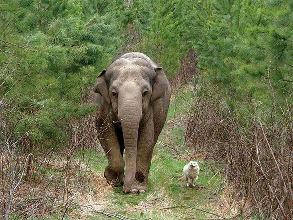 Tara and Bella - photo by Tennessee Elephant Sanctuary