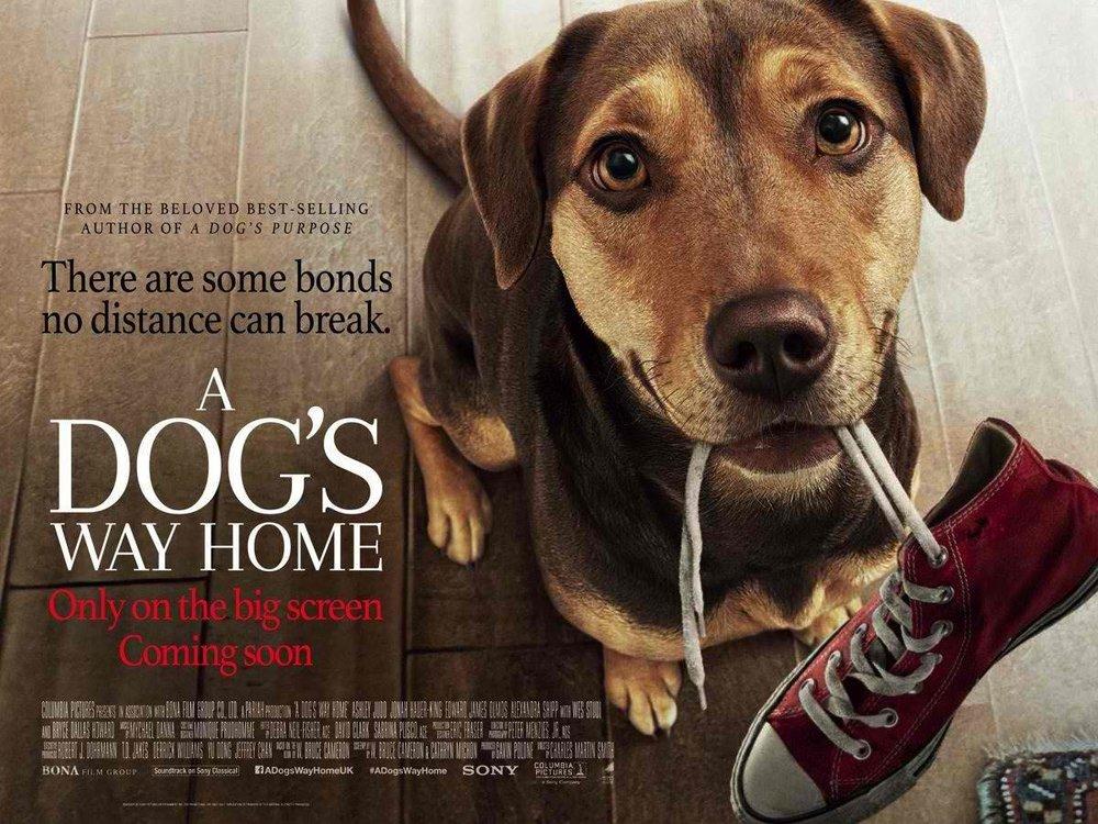dogs_way_home.jpg