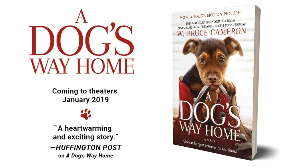 dogs way home 2.jpg