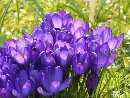The crocuses are already out in southern Ukraine soon they will be here as well