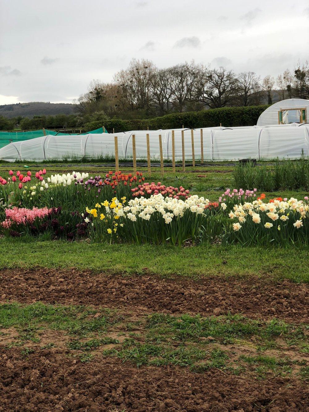 Twisted Sisters Flower Farm