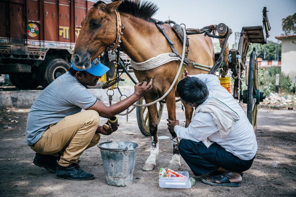 India.2015(78of289).JPG