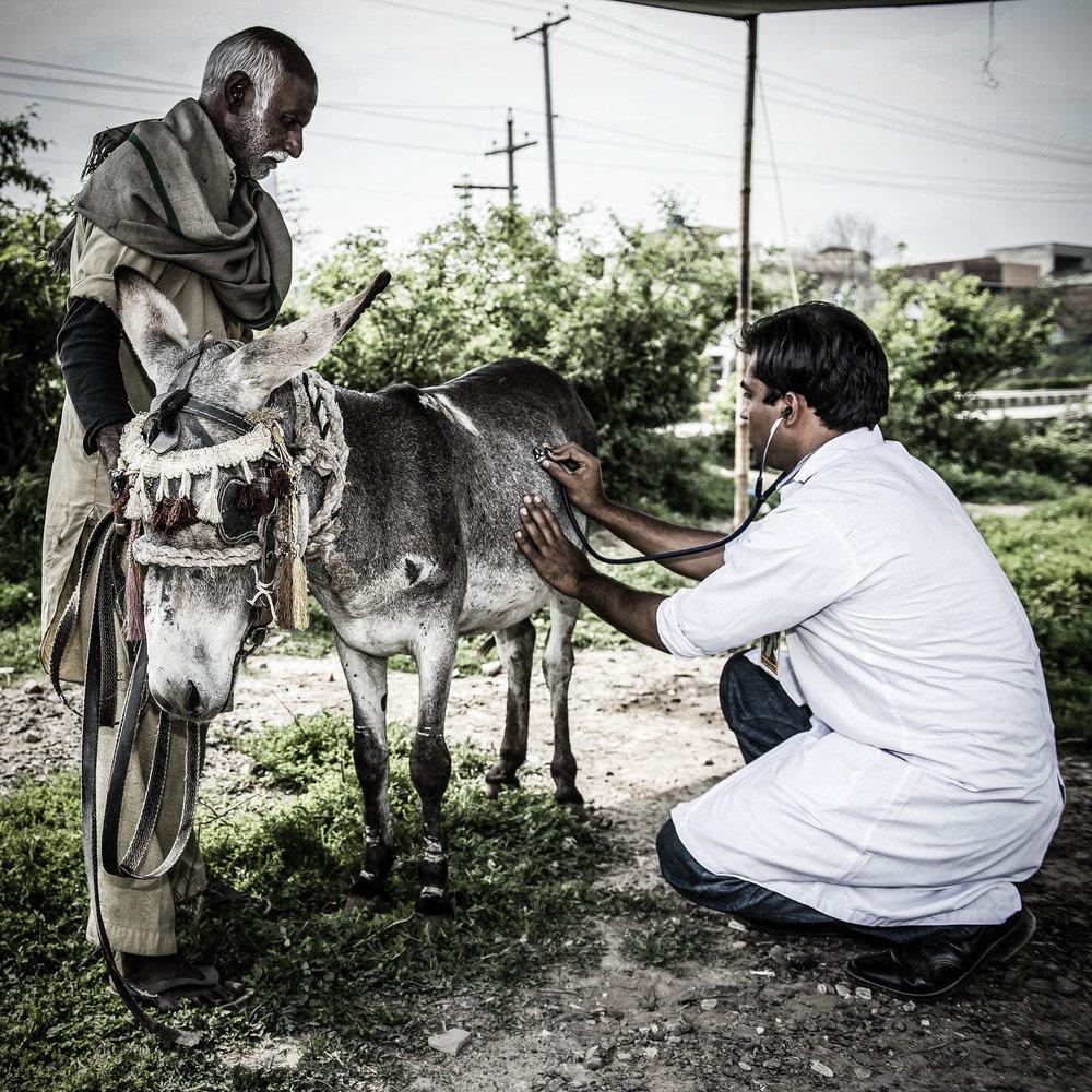Brooke Pakistan veterinarian 2-2.jpg