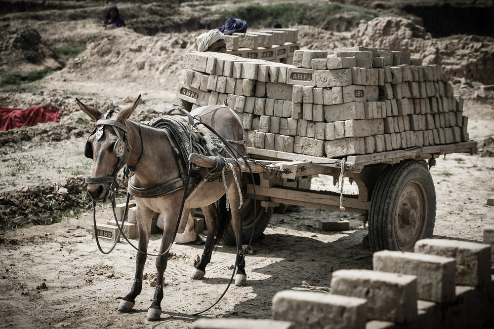 Overloaded mule at a brick kiln in India www.BrookeUSA.org-2.jpg