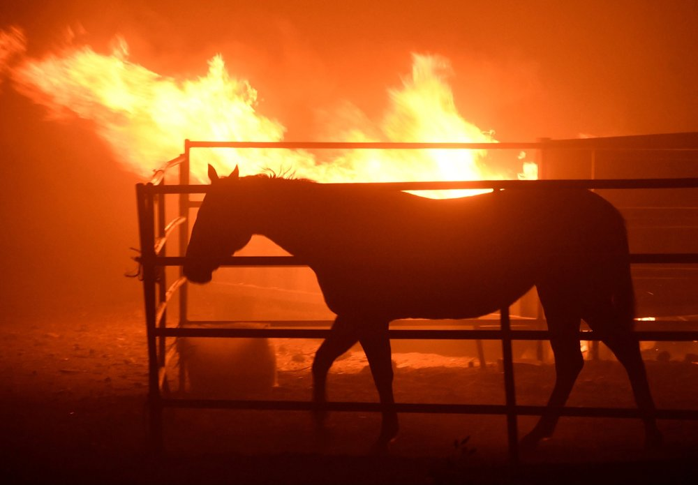 A horse was left behind during the fire in Sylmar, Calif., on Tuesday. NY Times/Credit: Gene Blevins/Reuters
