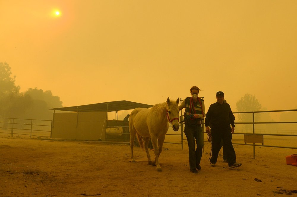 A horse was evacuated from a ranch in La Canada Flintridge, Calif., on Tuesday. Credit: David Crane/Los Angeles Daily News, via Associated Press
