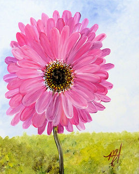 Gerbera Daisy (any color)