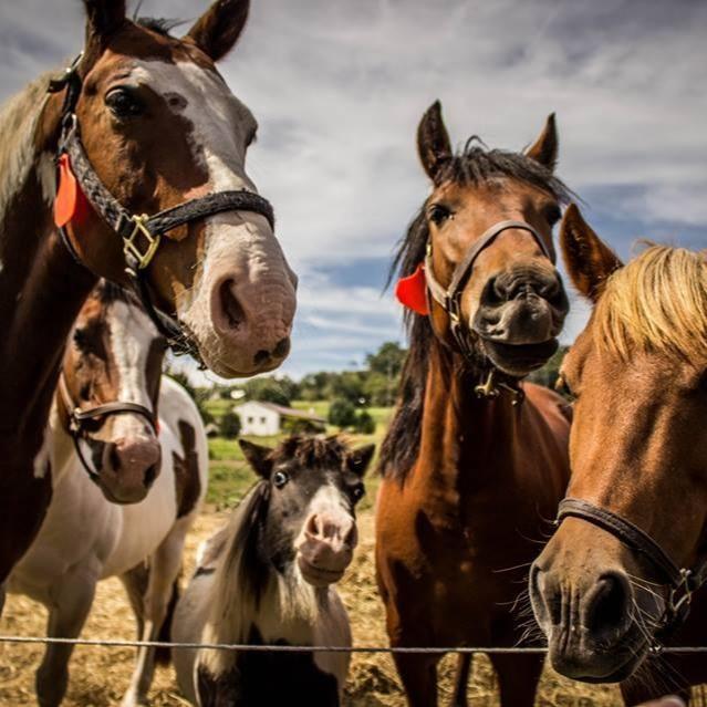 HORSES BEST.jpg