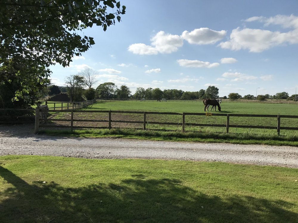 One of our paddocks with the horses grazing.
